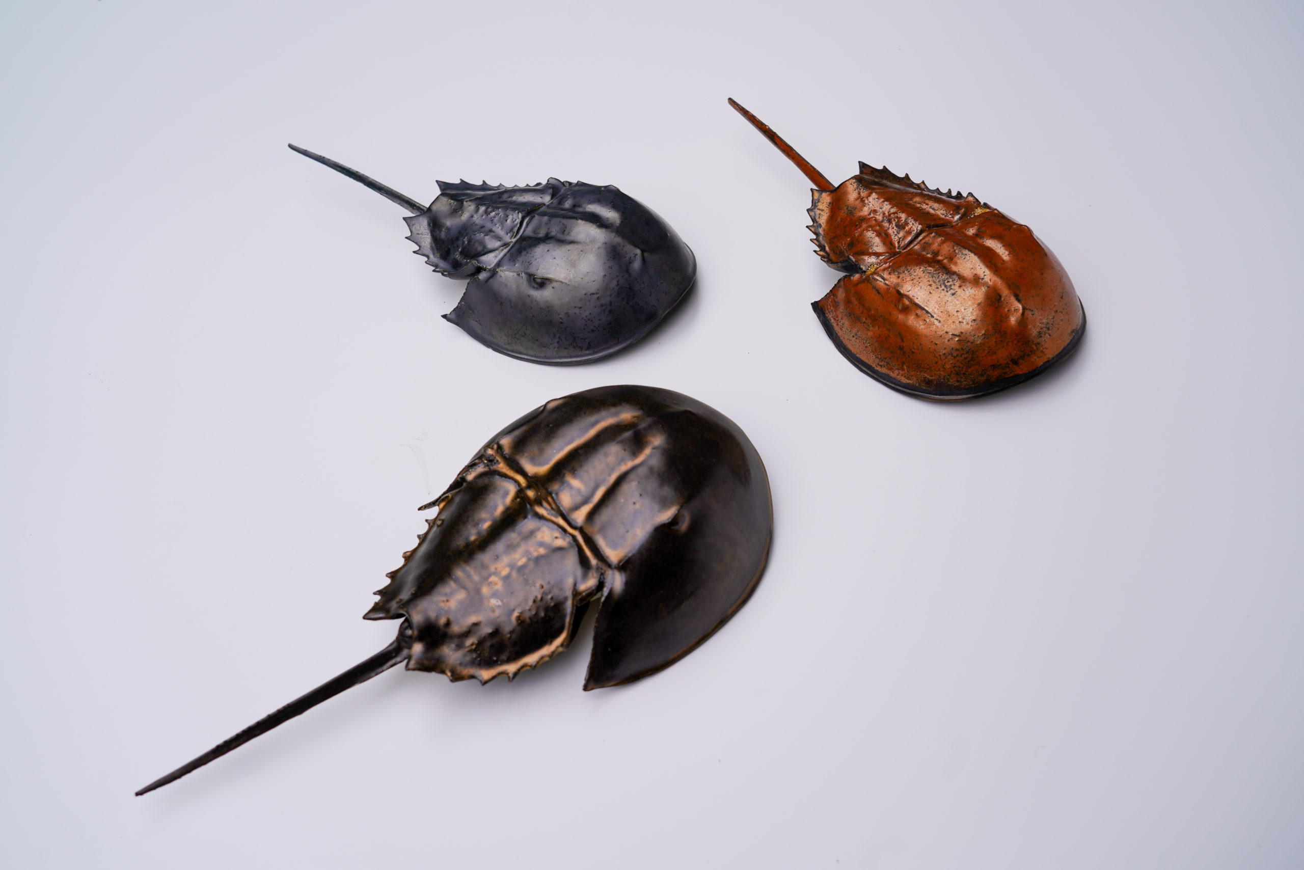 Ceramic Horseshoe Crab